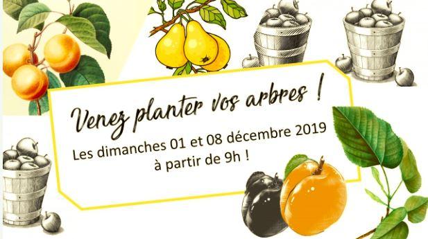 La Dahla - Plantation des Fruitiers